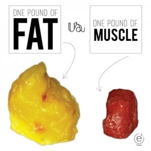 Where does all the fat go when you lose weight  Daily